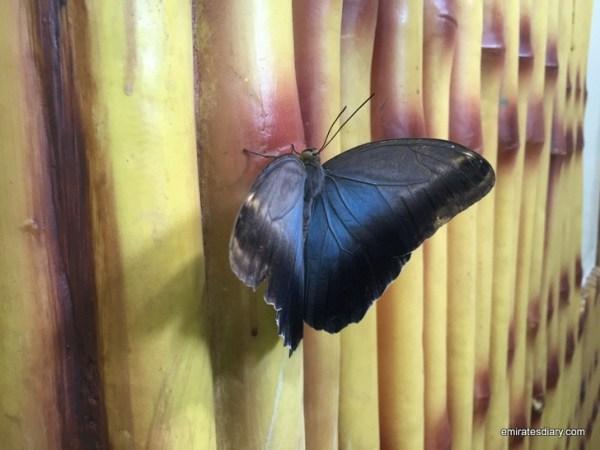 73-butterfly-garden-dubai-pictures-2015-emiratesdiary-073
