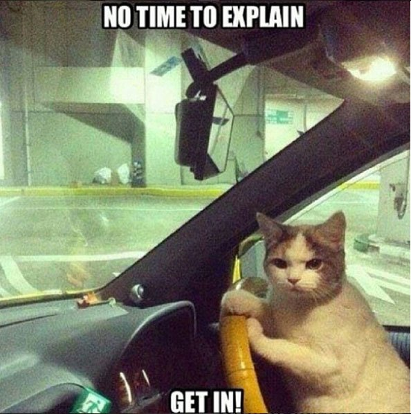 Image result for BEST CAT MEMES
