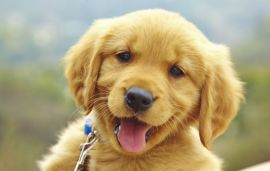 Where To Adopt Dogs In The UAE