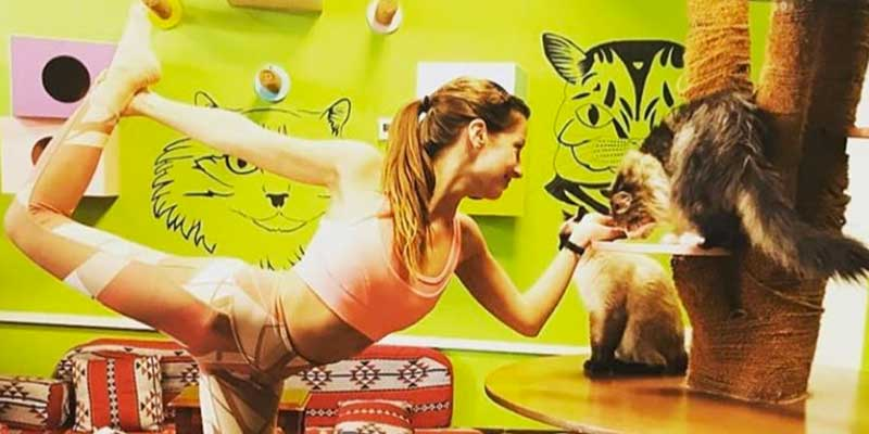cat-cafe-header