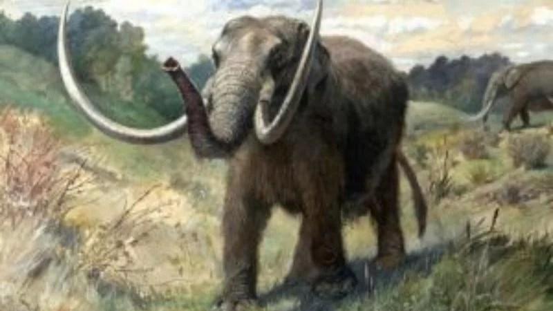 Hallaron restos fósiles prehistóricos en Colón