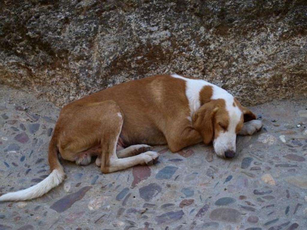 perros muertos San Sebastián Huehuetenango
