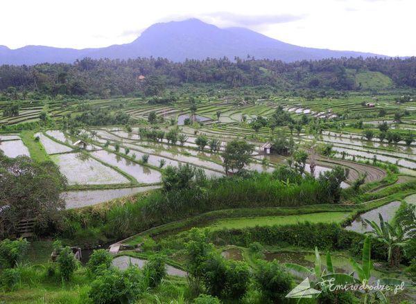 pola_ryzowe_Bali