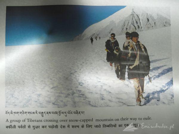 ucieczka_Tybetanczykow