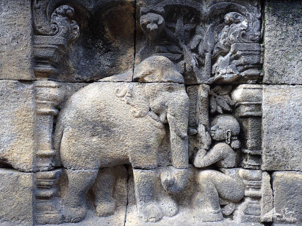 slon_Borobudur