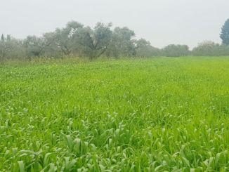 Eskişehir'de Koronavirüs Arsa ve Arazi Fiyatlarını Yüzde Artırdı