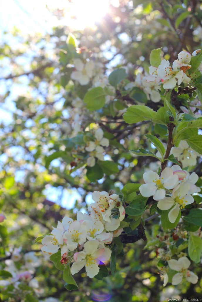 {Leben} Imkern mit der Bienenbox – Teil 1: Die Vorbereitungen