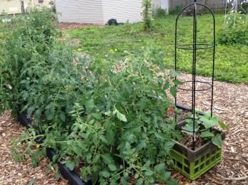 overgrown plants 3
