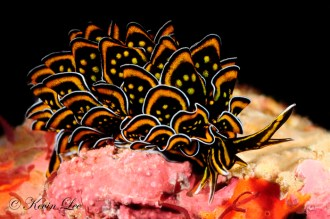 nudibranch-hell-yeah-jpg