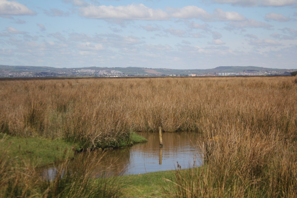 North Gower Marsh