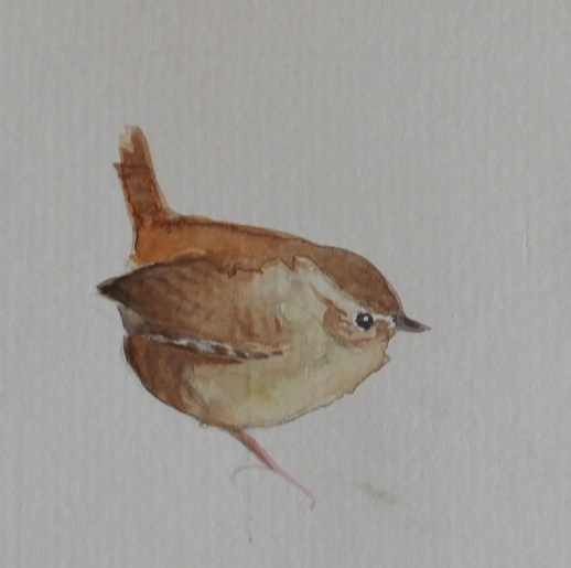 Watercolour of wren
