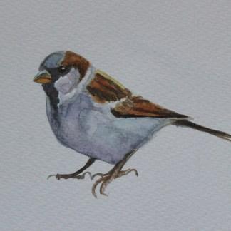 Sparrow Watercolour