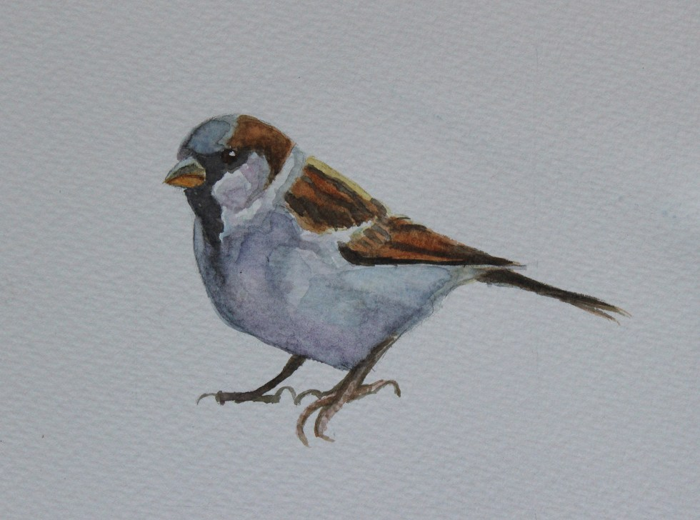 Sparrow Watercolour