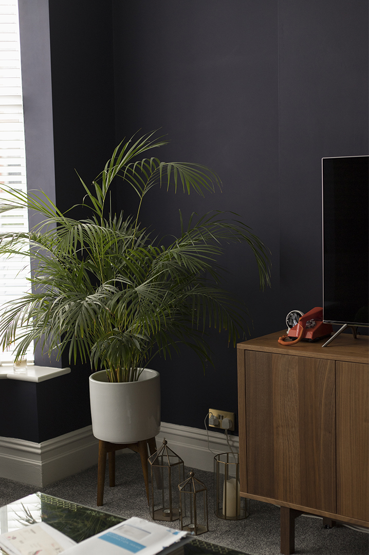 dark living room with large palm plant