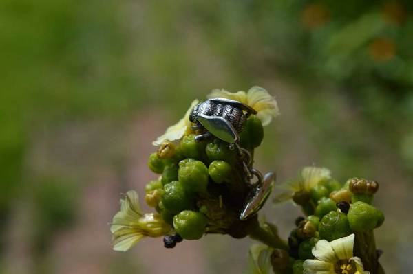 Bee-Cufflinks-1---Emma-Keating-Jewellery