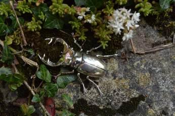 Stag-Beetle-10---Emma-Keating-Jewellery