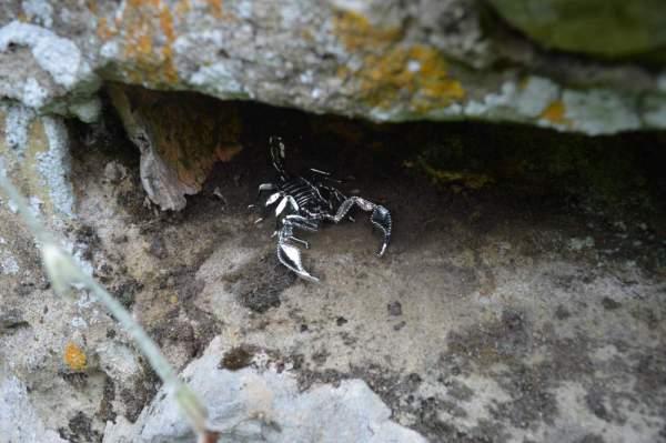 Sheerness Scorpion Orn8 - Emma Keating Jewellery__sm