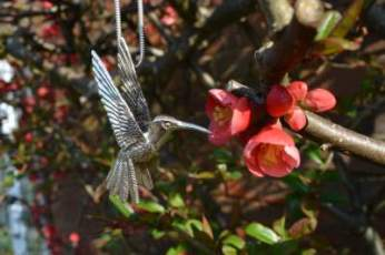 Hummingbird Pendant 3 - Emma Keating Jewellery