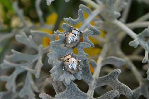 Ladybird Earrings (stud) - Emma Keating Jewellery