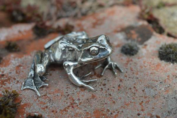 Common Frog L1s - Emma Keating Jewellery