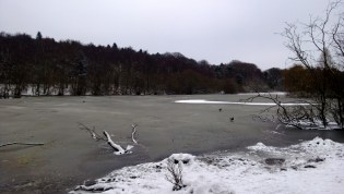 Birds and Ducks on the ice at Golden Acre Park