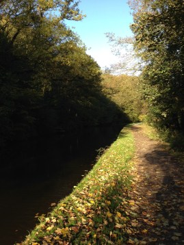 Autumn Leaves on Rodley Canal