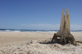 Whale carcass on Sandon Beach