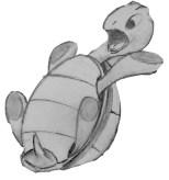 falling-turtle