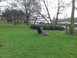Max the Weimaraner, with Laurel, playing