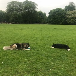 Chester, our Border Collie, making a friend during his dog Day Care
