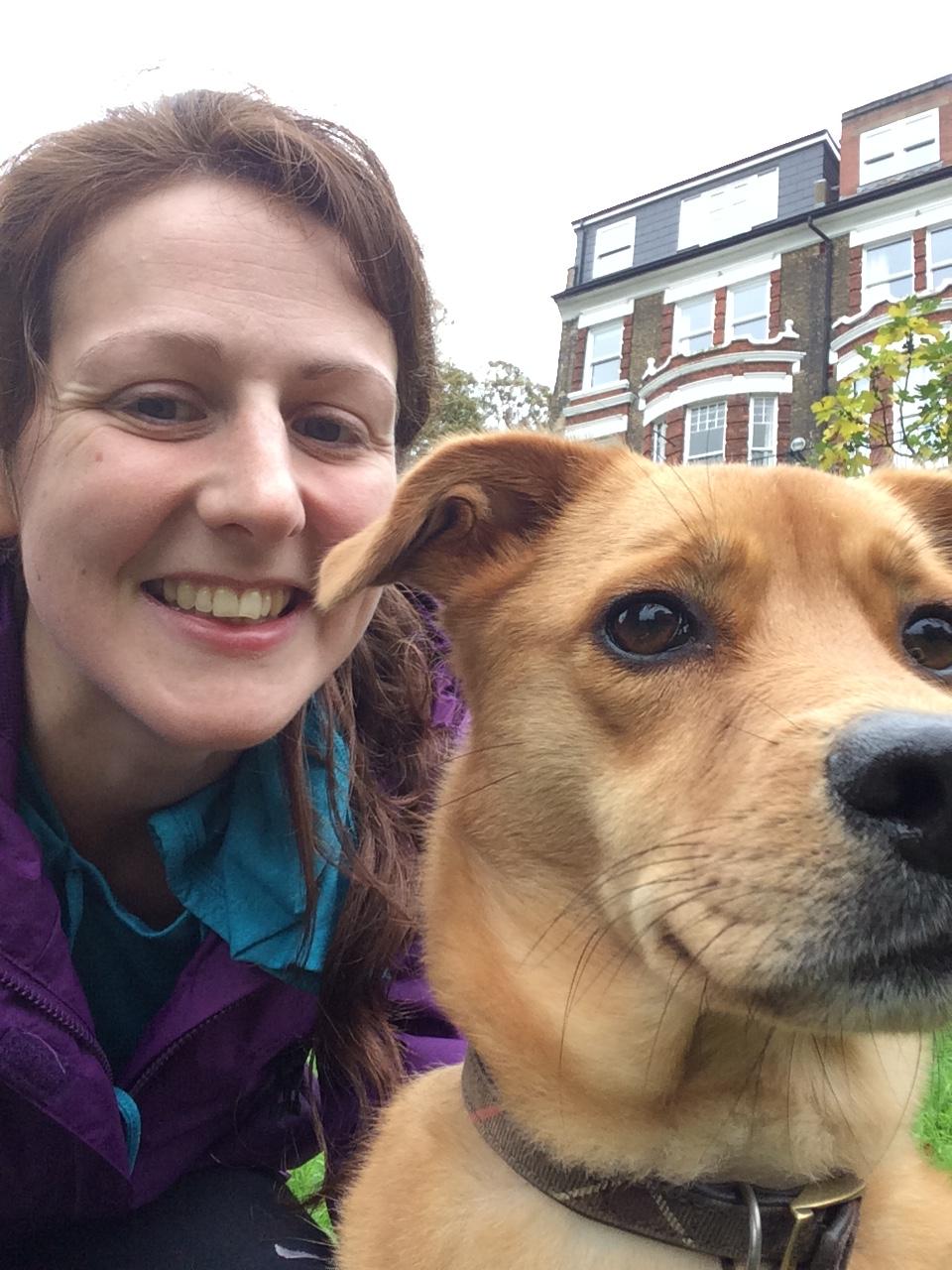 Georgie, our rescued crossbreed Golden Retriever/Labrador!