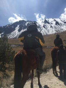 caballo en el nevado de toluca