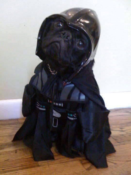 Perritos Star Wars