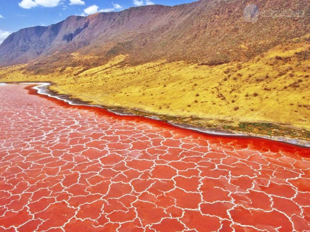 Lago que convierte en piedra