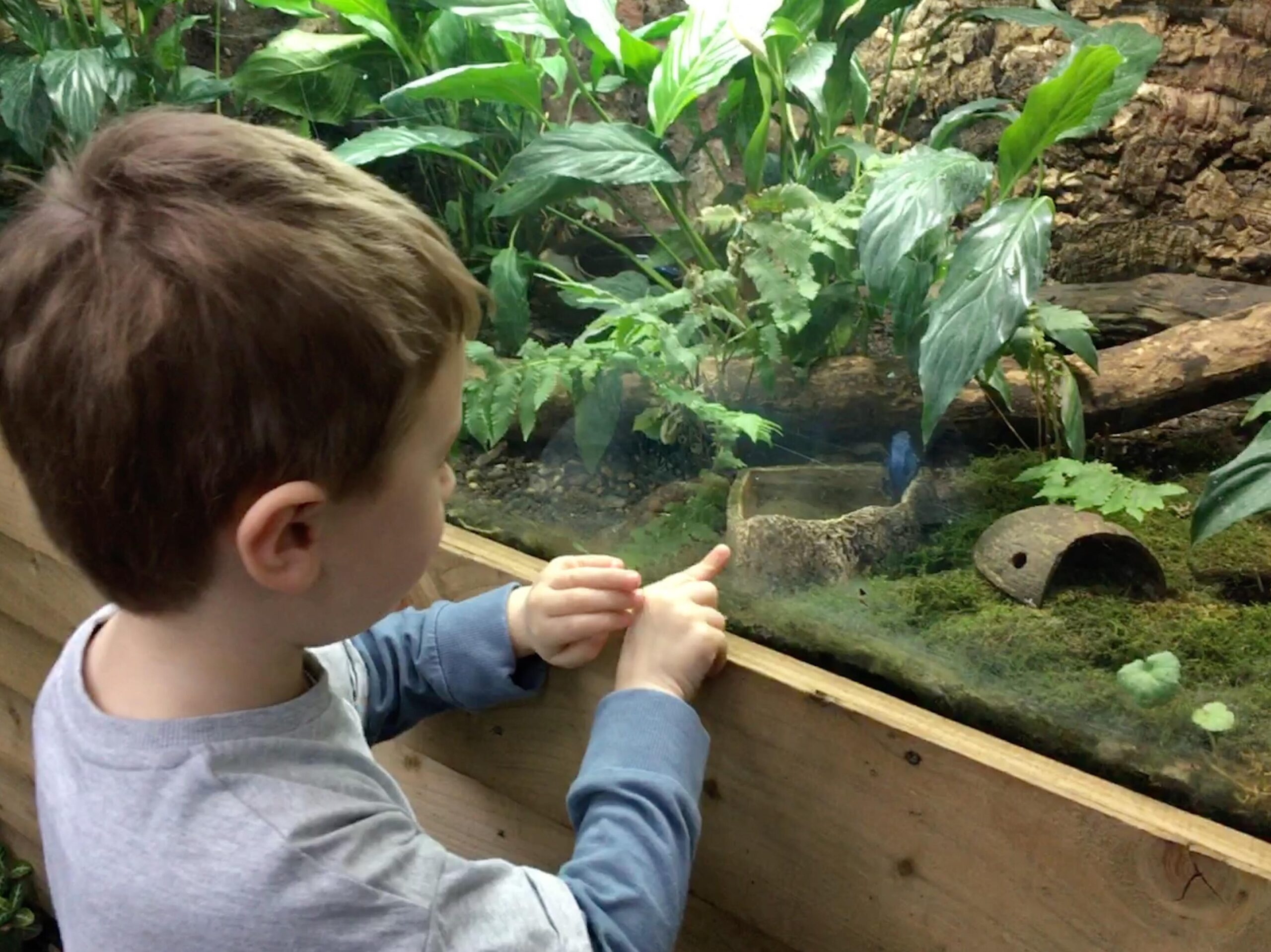 boy pointing at poison dart frog