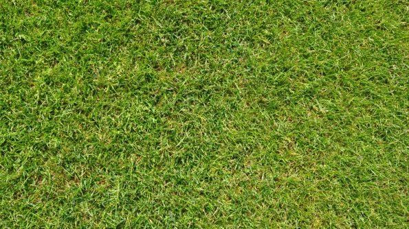 grass in a garden