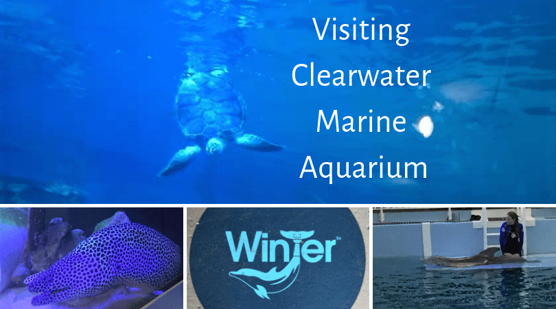 visting clearwater marine aquarium written over a photo of a turtle with 3 more images below of an eel, of winter's symbol and winter herself