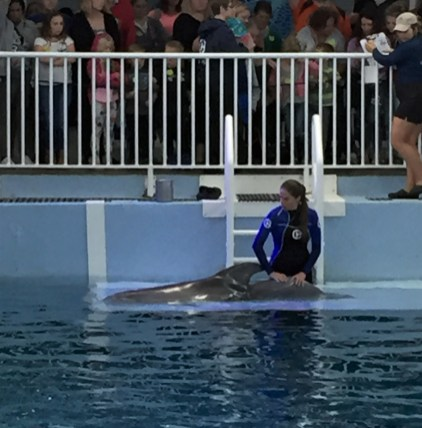 winter the dolphin having physiotherapy on her back