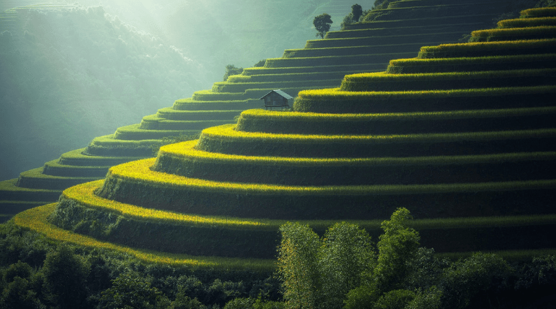 rice terraces natural wonders of Bali