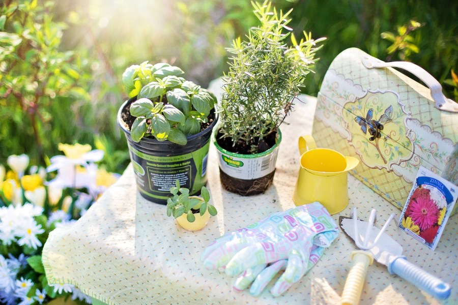 herbs in pots with gardening tools and gloves