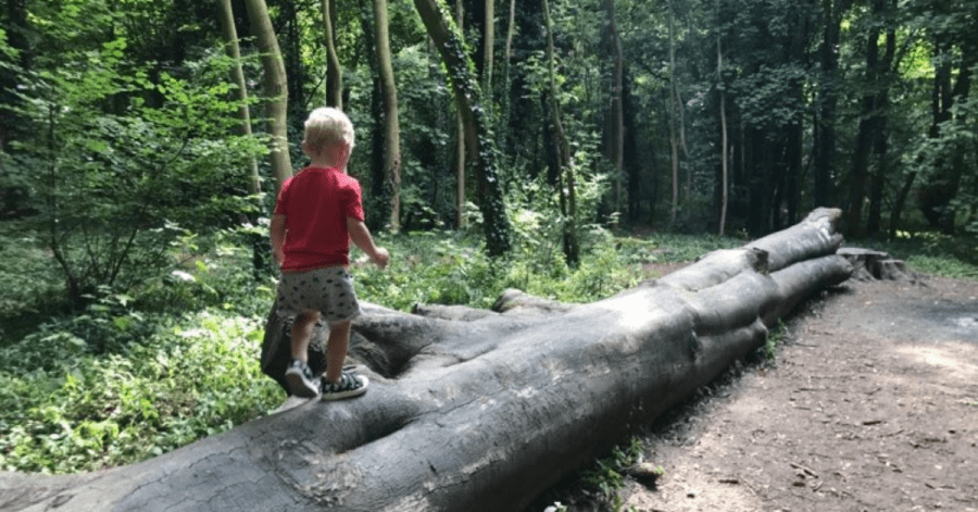 toddler walking along a large fallen tree in the woods