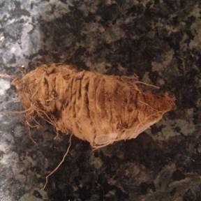 homegrown horseradish