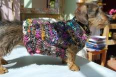 Scrabble in her newly spun coat