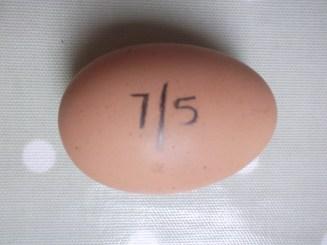 Jassi's Poached Egg :-) W/f, D/f