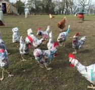 Rikke Digerud Chickens 1