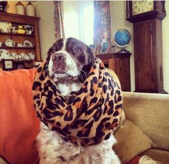 Maisie, the Queen of Sheba