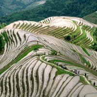 Longsheng rice terraces 龙胜梯田