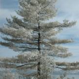 Tree - WIY