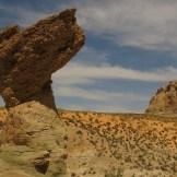Desert Show-Offs - WIY