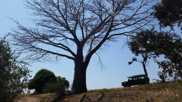 Baobab location